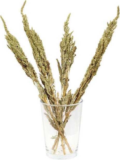 Amarant torkad, Höjd 50 cm, Grön