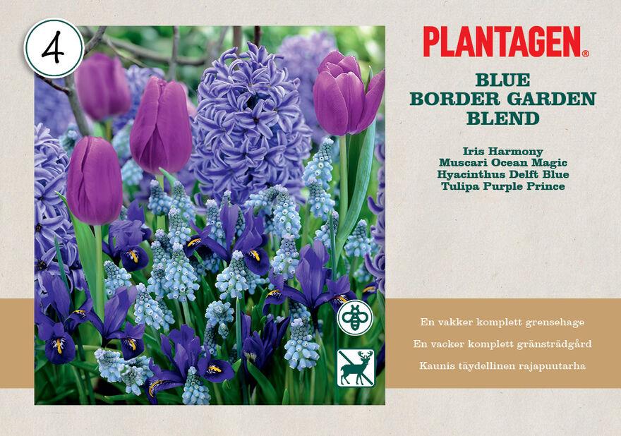 Vårlök mix 'Blue Blend'