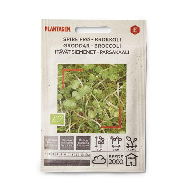 Groddar Broccoli