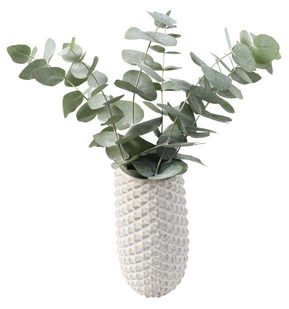Eukalyptus 3-pack, Höjd 40 cm, Grön