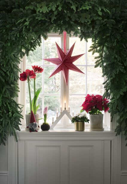 Julstjärna flergrenad, Höjd 30 cm, Röd