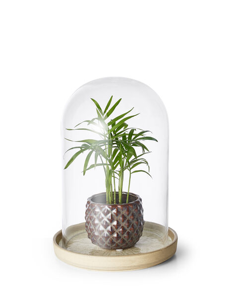 Glaskupol Disa, Ø15 cm, Transparent