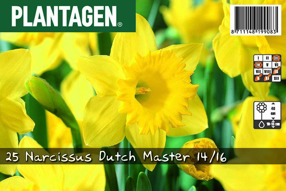 Påsklilja 'Dutch Master', Flera färger