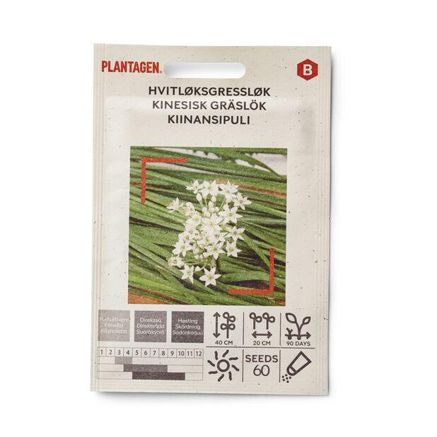 Kinesisk gräslök