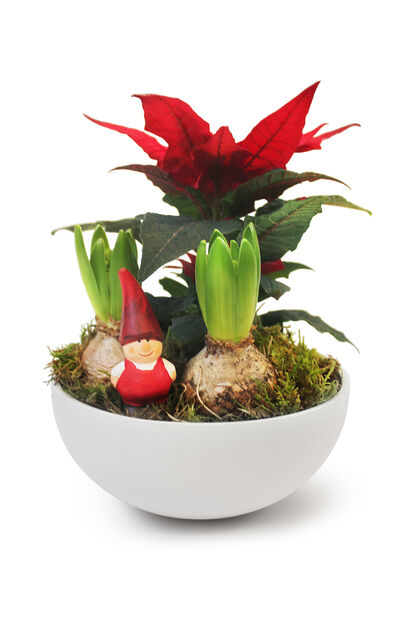 Blomgrup Bill