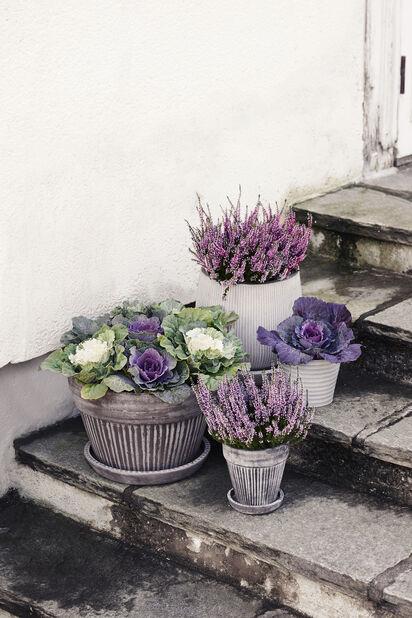 Ljung Garden Girls, Ø10.5 cm, Flera färger