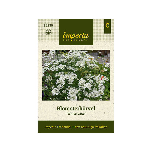 Blomsterkörvel 'White Lace', Vit