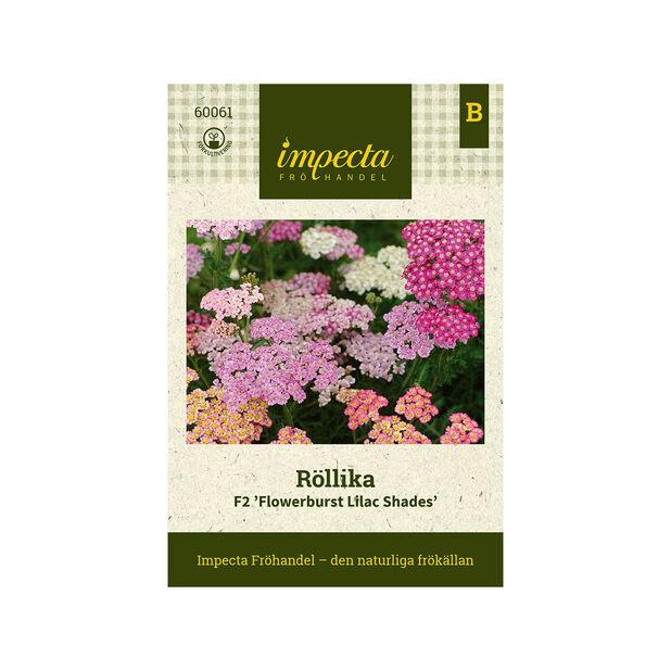 Röllika F2 'Flowerburst Lilac Shades', Flerfärgad