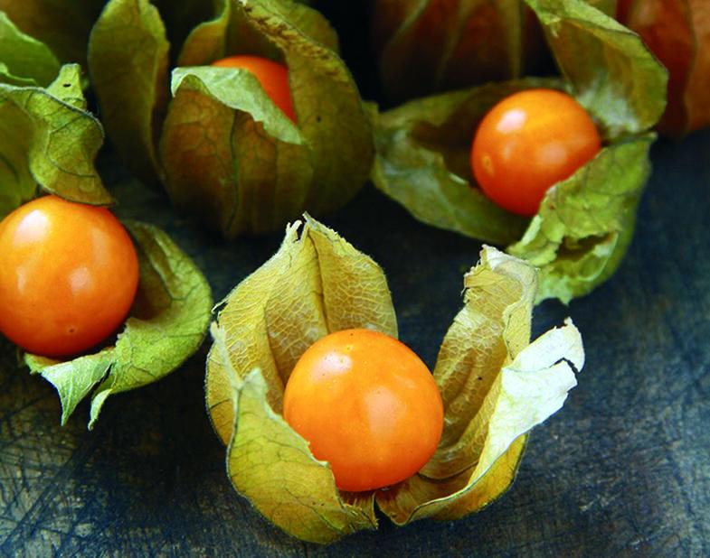 Kapkrusbär 'Little Lantern', Ø10.5 cm, Orange