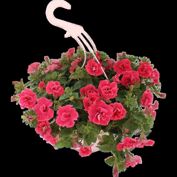 Petunia Origami 'Watermelon', Ø25 cm, Orange