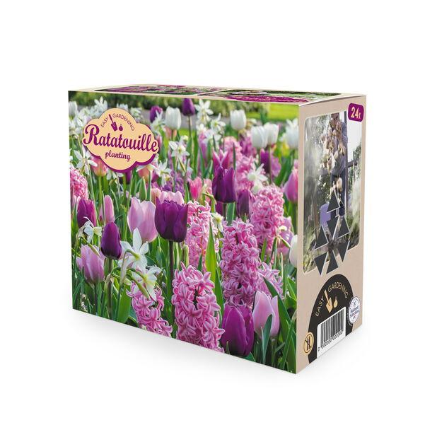 Vårblommande lök mix Ratatouille, Flerfärgad