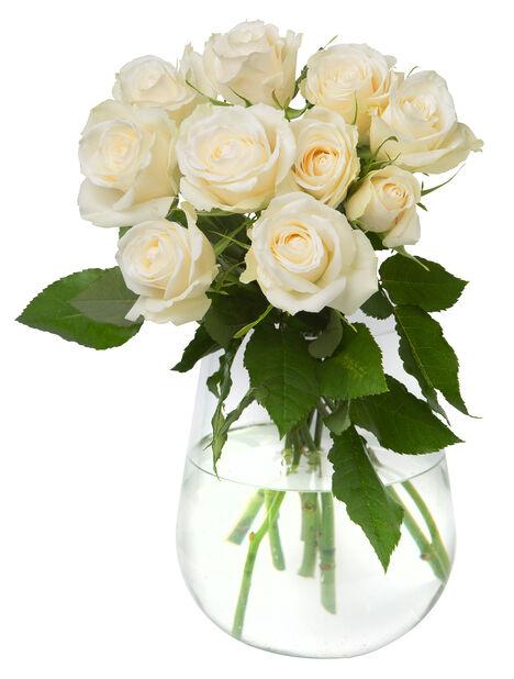 Rosor 10-pack 40 cm White