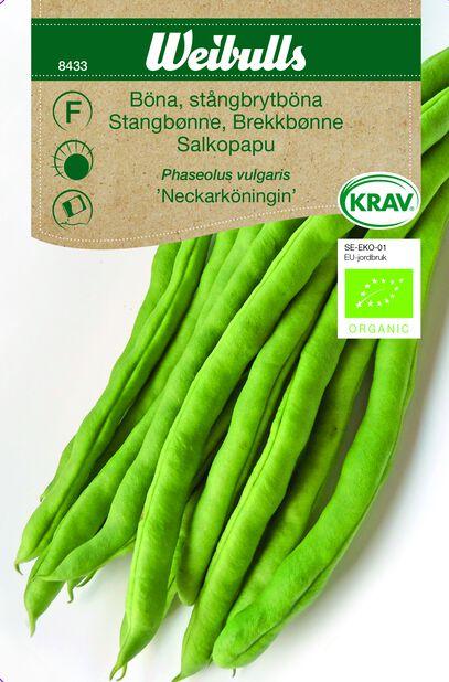Stångbrytböna 'Neckarköningin' KRAV