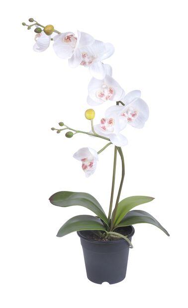 Orkidé i kruka H53 cm, vit, konstgjord