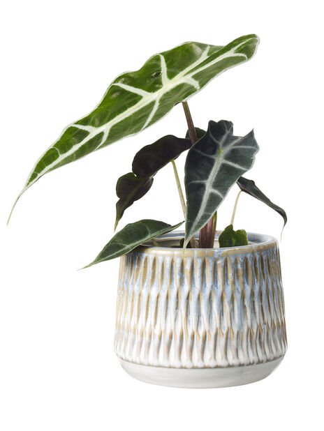 Grönväxtmix 6 cm