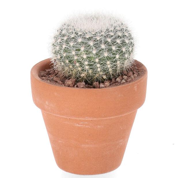 Kaktus mix, Höjd 7 cm, Grön