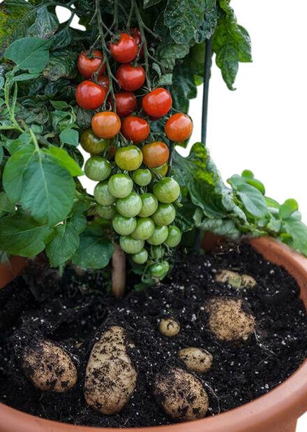 Potatom, Ø12 cm, Flera färger