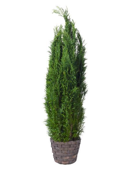 Träkorg, Ø31 cm, Grå