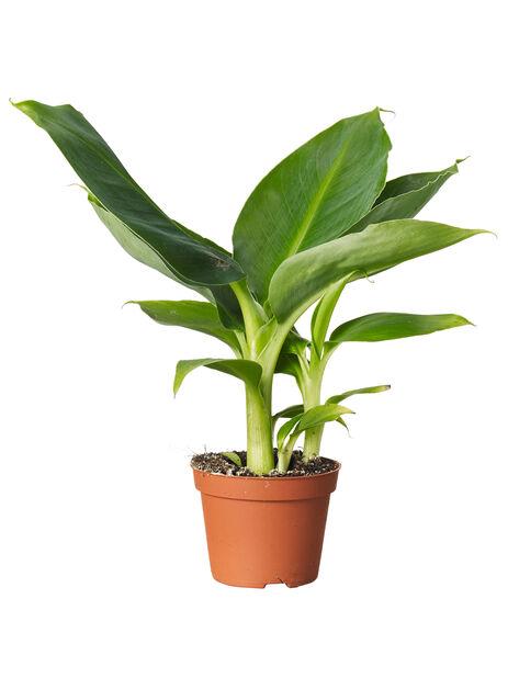 Grönväxtmix, mini, nr 10