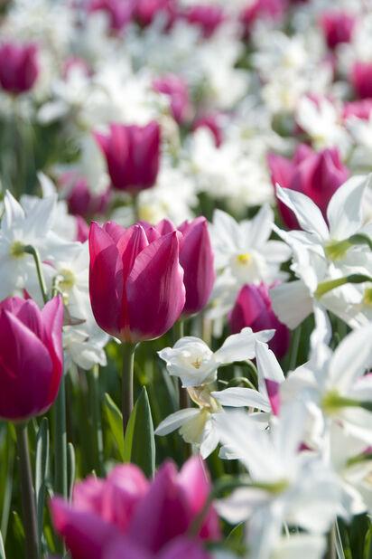 Höstlök mix Spring Wonder, Flerfärgad