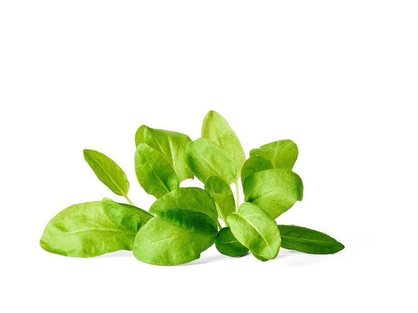 Ängssyra KRAV, Ø10.5 cm, Grön
