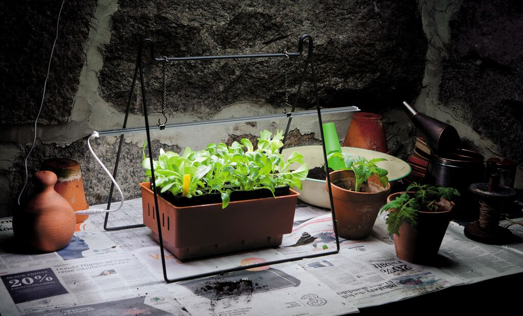 Växtbelysning LED No.1, Längd 60 cm