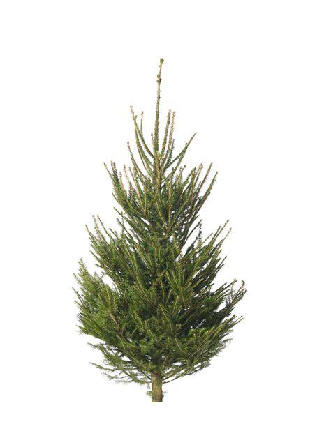 Julgran, Höjd 150-175 cm, Grön