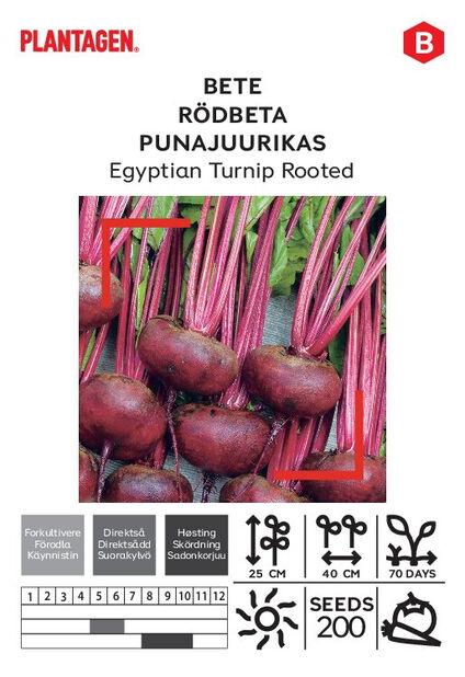 Rödbeta 'Egyptian Turnip Rooted'