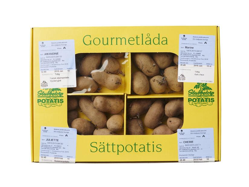 Sättpotatis Gourmétlådan 4 sorter, 1.4 kg, Flera färger