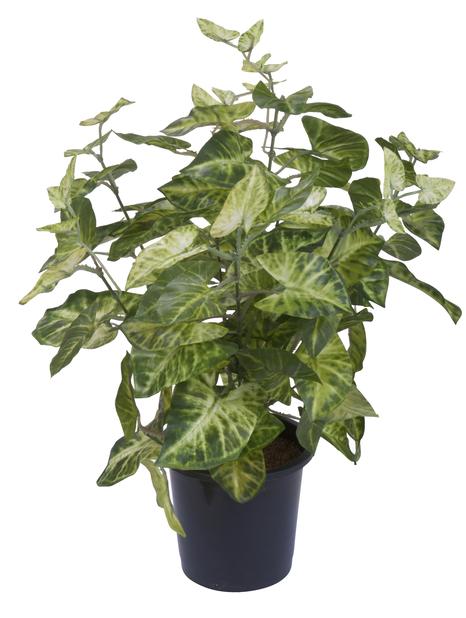 Grönväxt i kruka H39 cm
