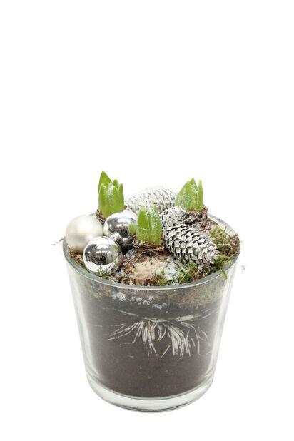 Julgrupp hyacinter med pynt, Höjd 40 cm, Flera färger