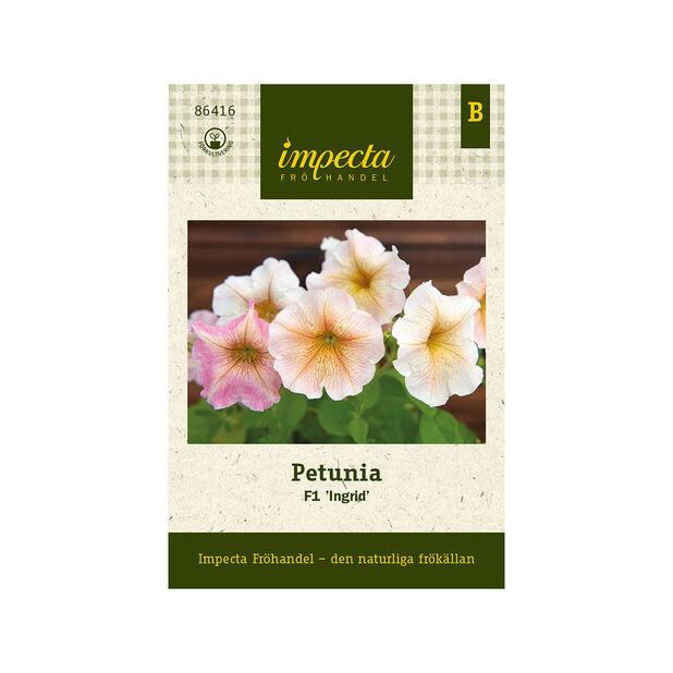 Petunia F1 'Ingrid', Gul
