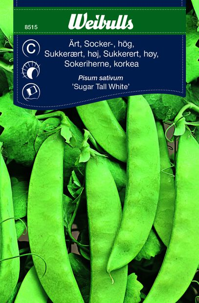 Sockerärt 'Sugar Tall White'