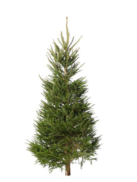 Julgran KRAV, Höjd 200-250 cm, Grön