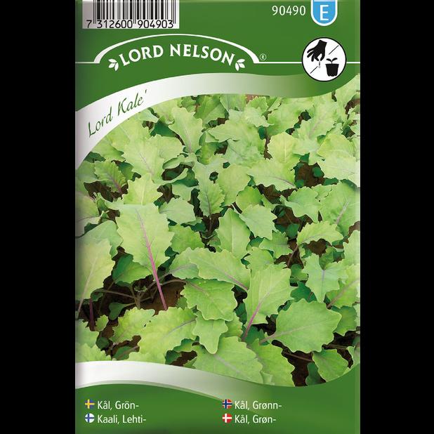 Grönkål 'Lord Kale', Flerfärgad