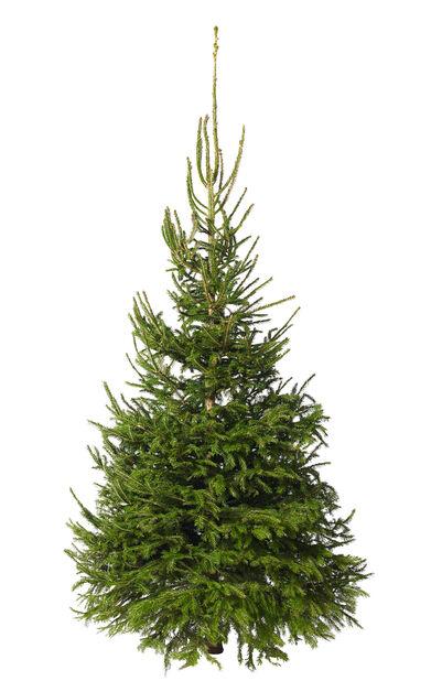Julgran KRAV, Höjd 175-200 cm, Grön