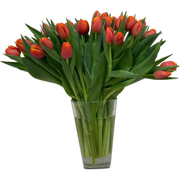 Tulpaner 30-pack, Höjd 40 cm, Flera färger