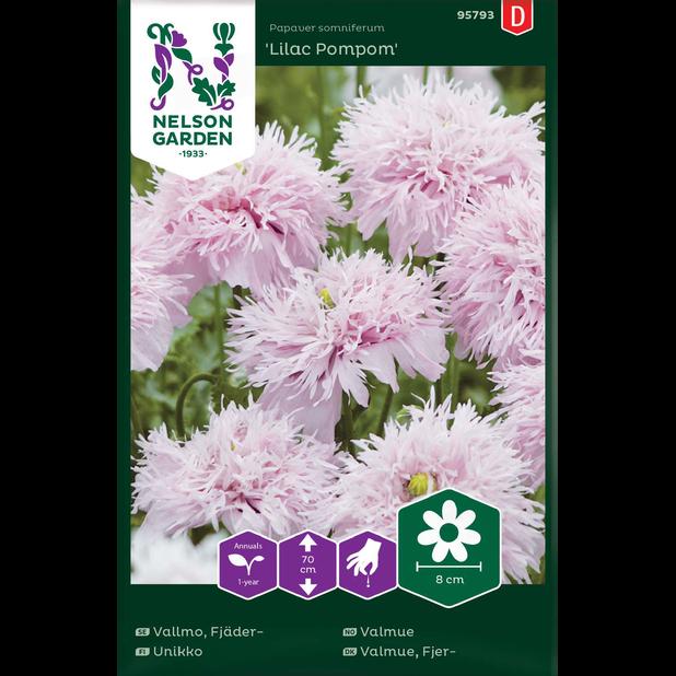 Fjädervallmo 'Lilac Pompom', Flerfärgad
