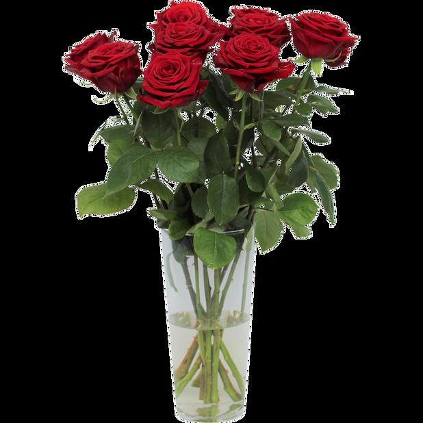 Rosor 'Romantic Red'