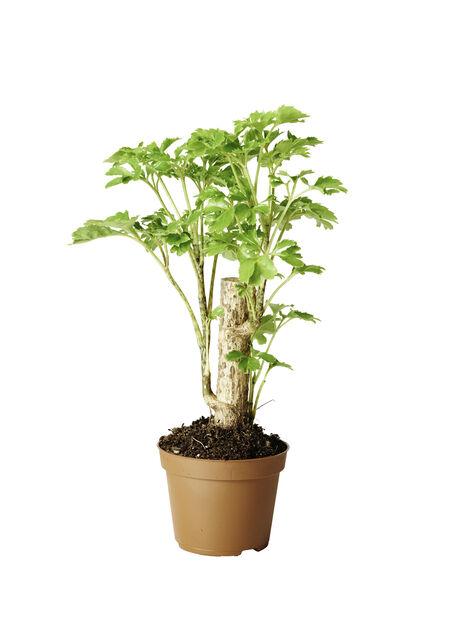 Grönväxtmix mini