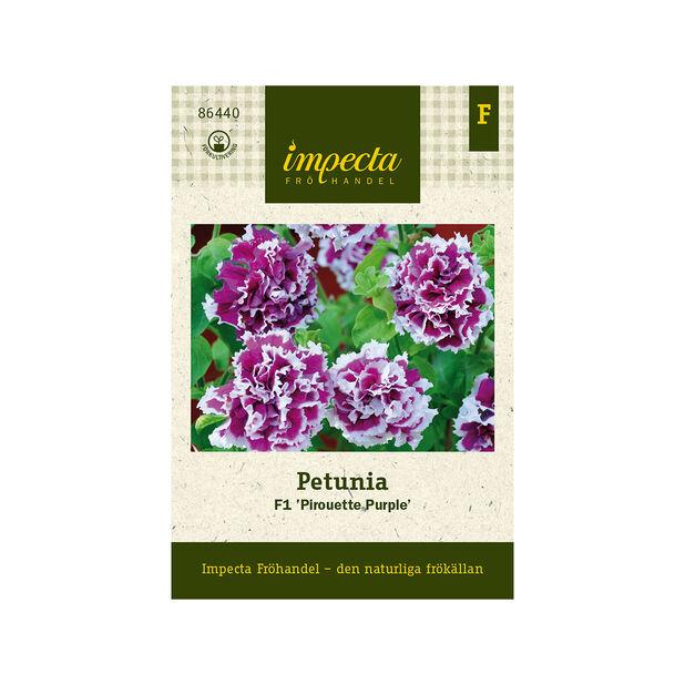Petunia F1 'Pirouette Purple', Lila
