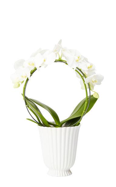 Kristina orkidékruka Ø15,5cm, vit