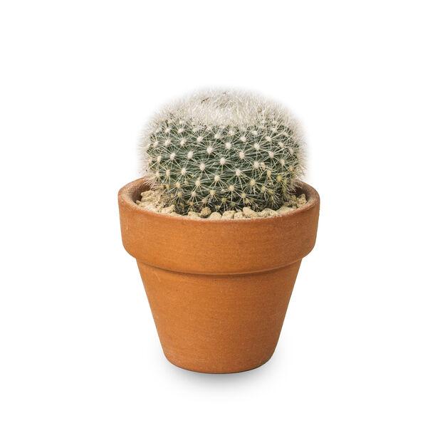 Kaktusmix i terrakottakruka, Höjd 6 cm, Grön