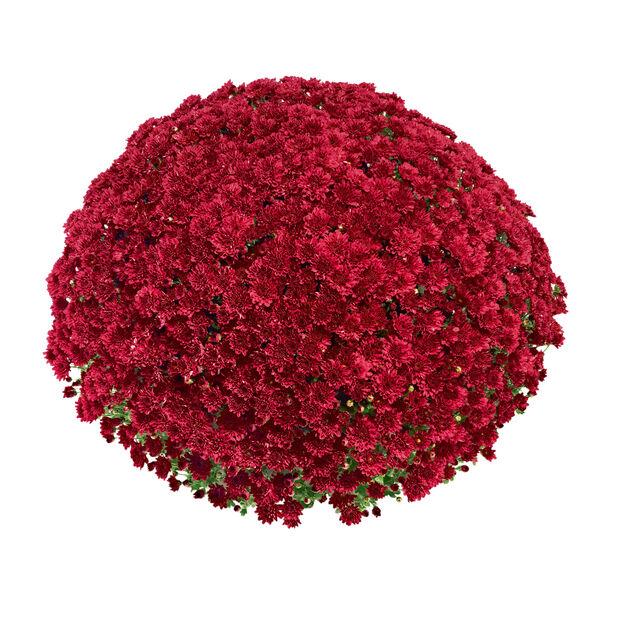 Bollkryss, Ø19 cm, Röd