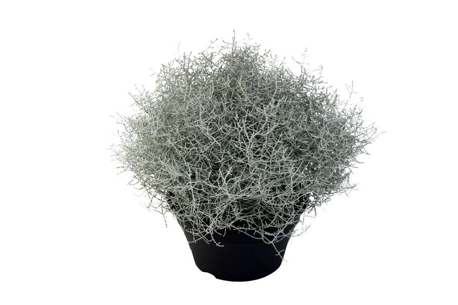 Silvergirland, Ø23 cm, Grå