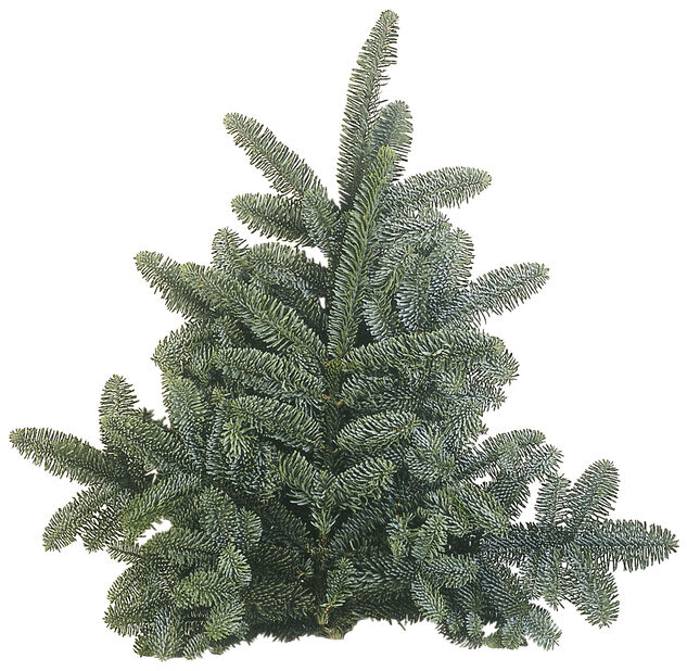 Granbukett nobilis, Höjd 40 cm, Grön
