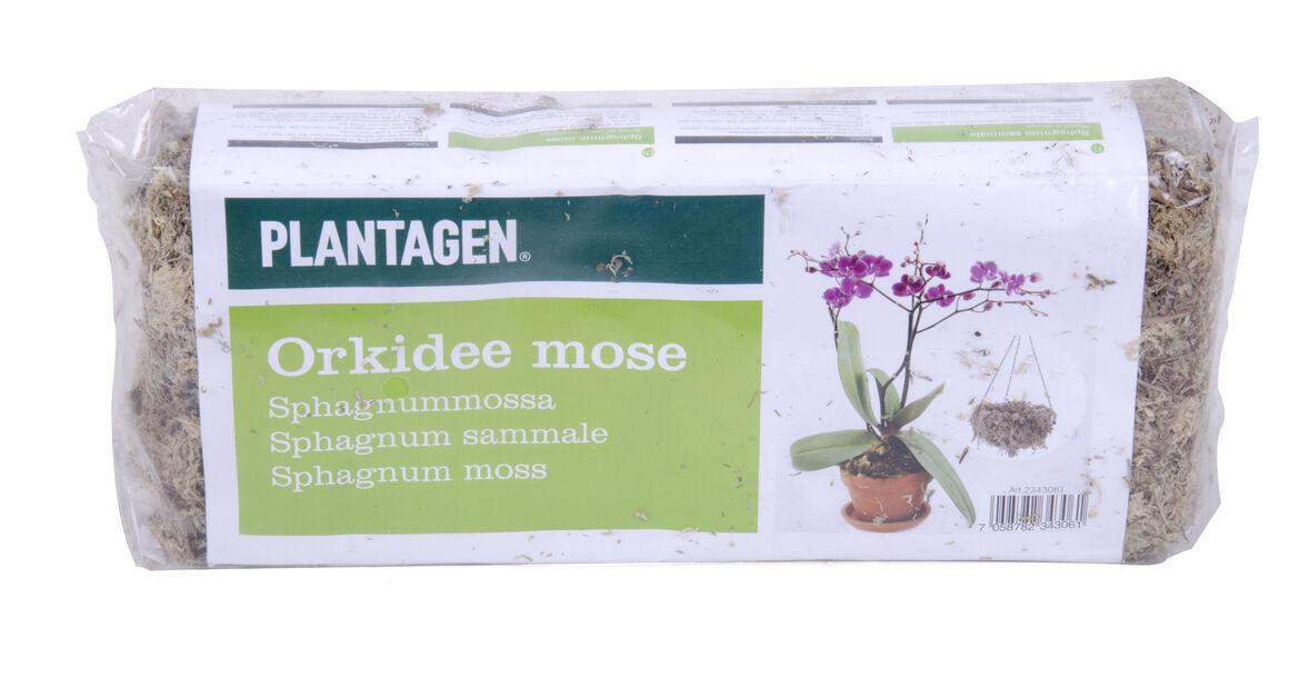 Orkidémossa, 150 g, Offwhite