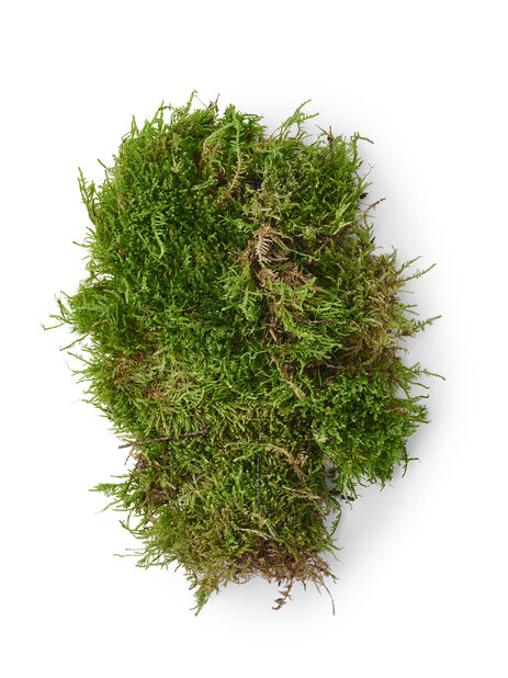 Grön mossa, Höjd 25 cm, Grön