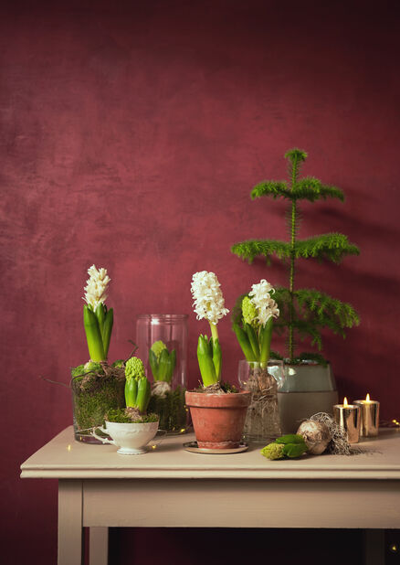 Hyacintvas, Höjd 14 cm, Transparent
