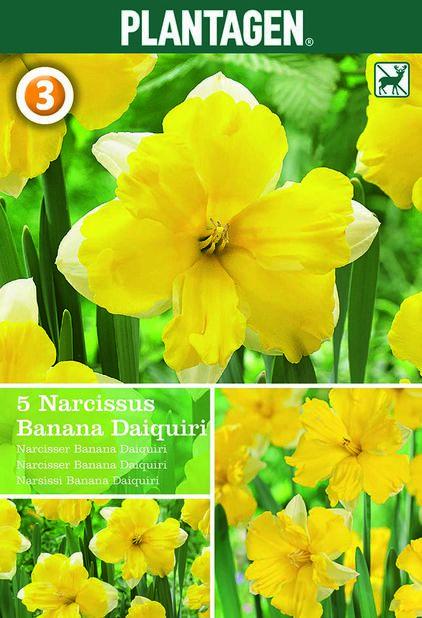 Påsklilja 'Banana Daiquiri', Gul